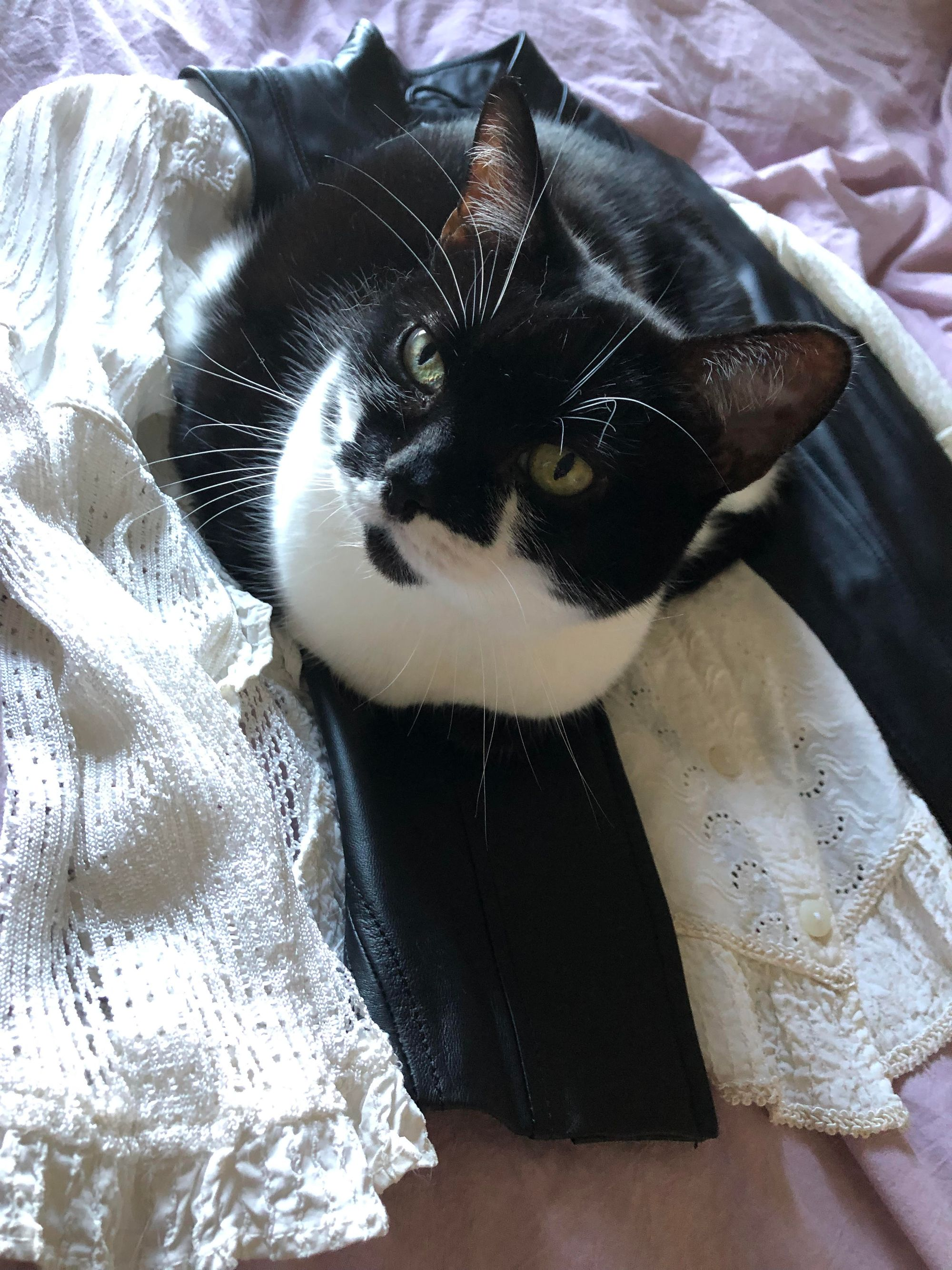 Close-up of a black and white cat sitting on a black and white outfit laid flat on a lavender bedspread. The outfit is made up of an off-white button-up shirt with lacy detail at the hem and long, flared, lacy sleeves; on top of it is a black leather vest. The cat is sitting on the leather, and the effect of perspective makes her look a bit like she's grown out of the outfit.